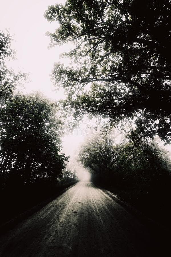 Grayscale photography of a road surrounded by trees during a foggy weather. A grayscale photography of a road surrounded by trees during a foggy weather stock photo