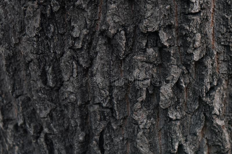 Grayscale shot of the surface of a tree - perfect for a cool background wallpaper. A grayscale shot of the surface of a tree - perfect for a cool background stock photography