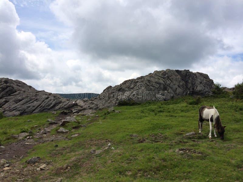 Grayson高地国家公园弗吉尼亚的野马/小马 免版税库存图片