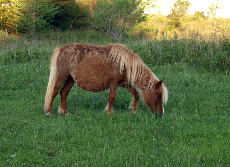 Grayson Highlands Wild Ponies foto de archivo