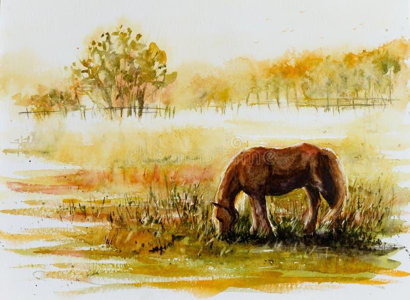 Grazin лошади на луге иллюстрация вектора