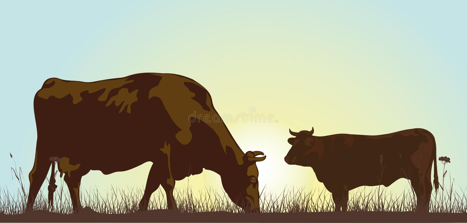 grazing cattle in the morning stock illustration