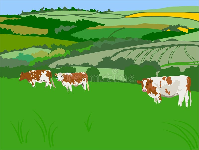 Download Grazing Cows stock vector. Illustration of fields, landscape - 78913