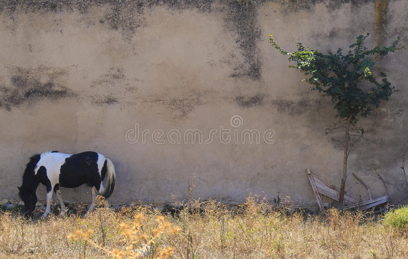 Download Grazing horse stock photo. Image of land, pony, horse - 26562320