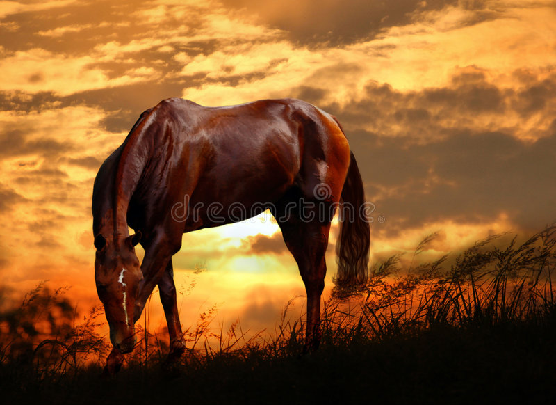 Download Grazing horse stock photo. Image of sunrise, lovely, farm - 4335340