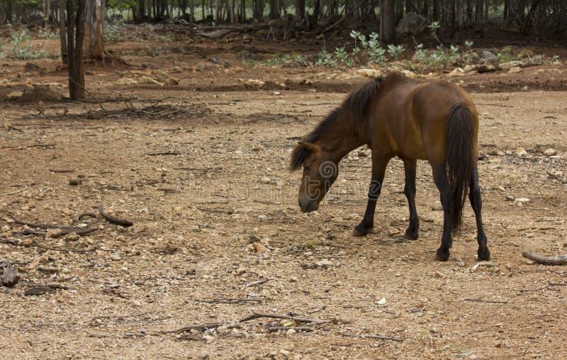 Grazing horse back royalty free stock image