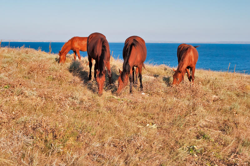 Download Grazing horses stock image. Image of meadow, sorrel, summer - 15957023