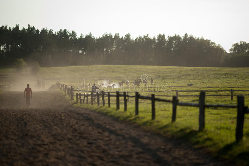 Grazing horses royalty free stock images