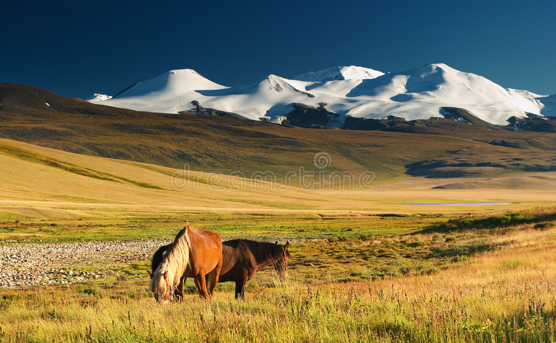 Grazing horses and snowy mount royalty free stock photography