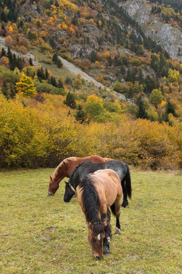 Grazing van paarden in de weide stock foto's