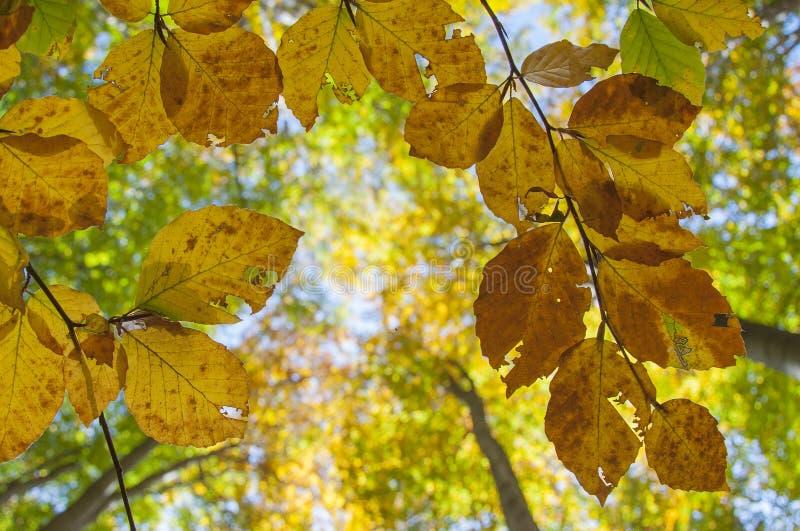 Grean und orange Herbst lizenzfreies stockbild