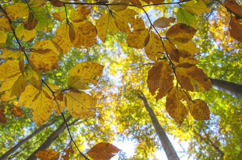 Grean und orange Herbst lizenzfreie stockbilder