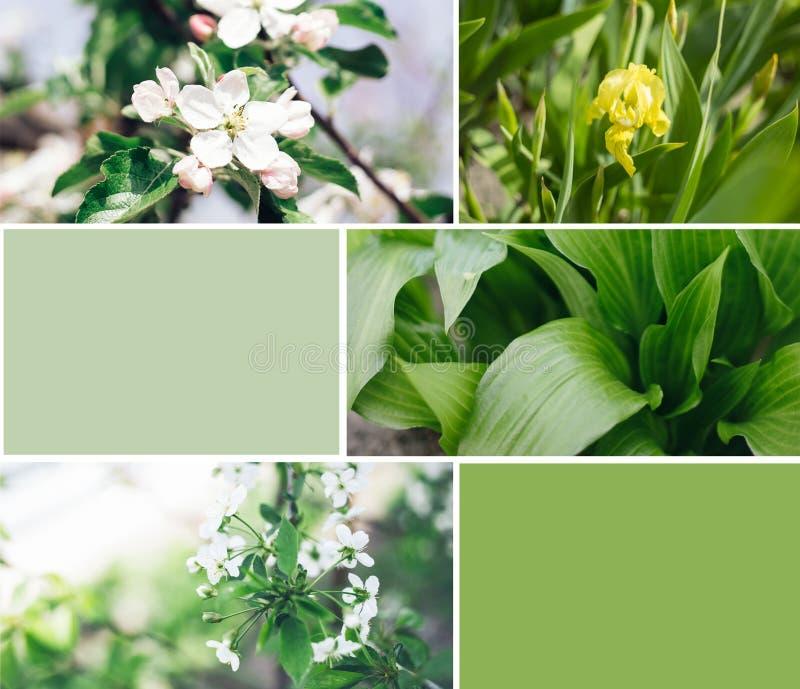 Grean v?xter med blommacollage royaltyfria bilder