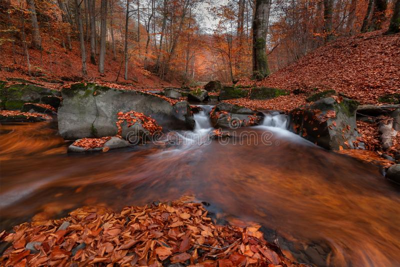 Great Autumn Forest Landscape In Orange Color With Beautiful Creek And Misty Forest. Enchanted Autumn Beech Forest With Red Fallin stock images