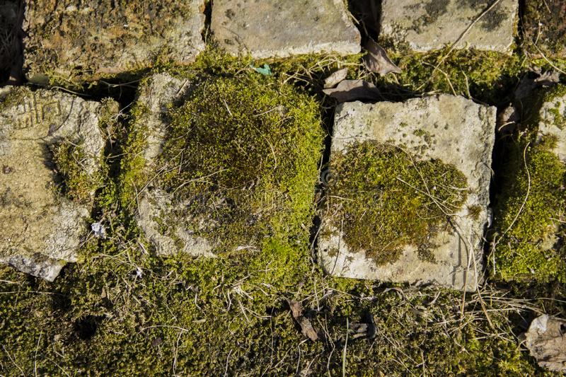 Great background. Green moss grown on bricks royalty free stock photo