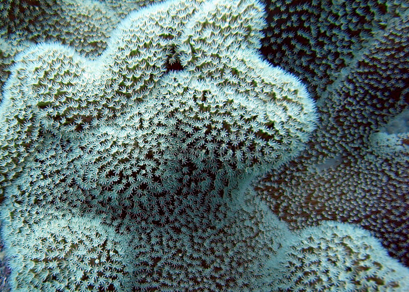 Great Barrier Reef Coral stock images