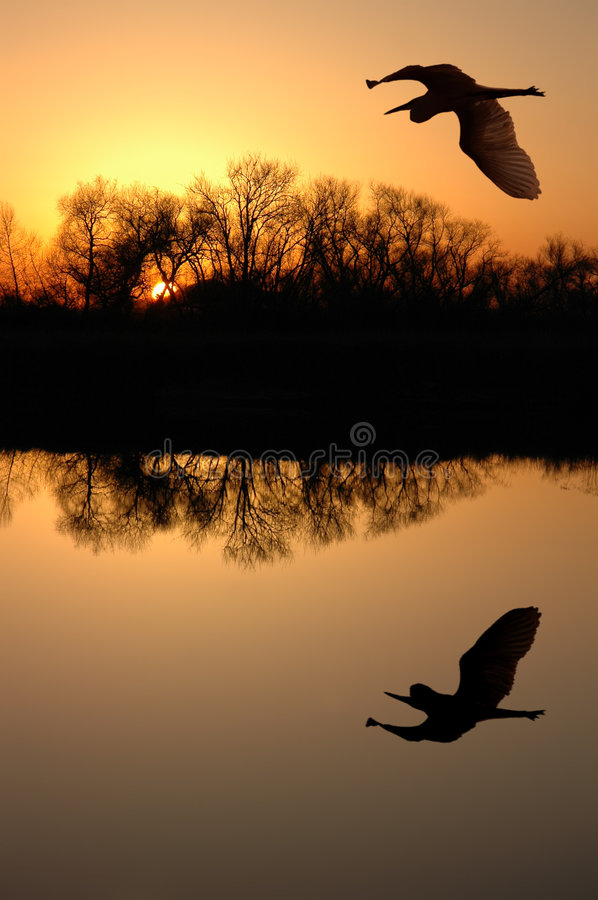 Download Great Blue Heron stock image. Image of river, evening - 2510395