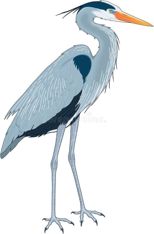 Free Great Blue Heron Illustration Royalty Free Stock Photo - 133846335
