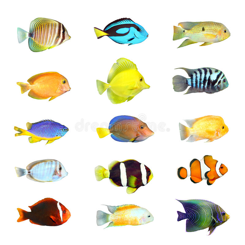 Great collection of a tropical fish. royalty free stock photo