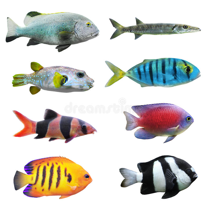 Great collection of a tropical fish. Tropical fish collection on white background