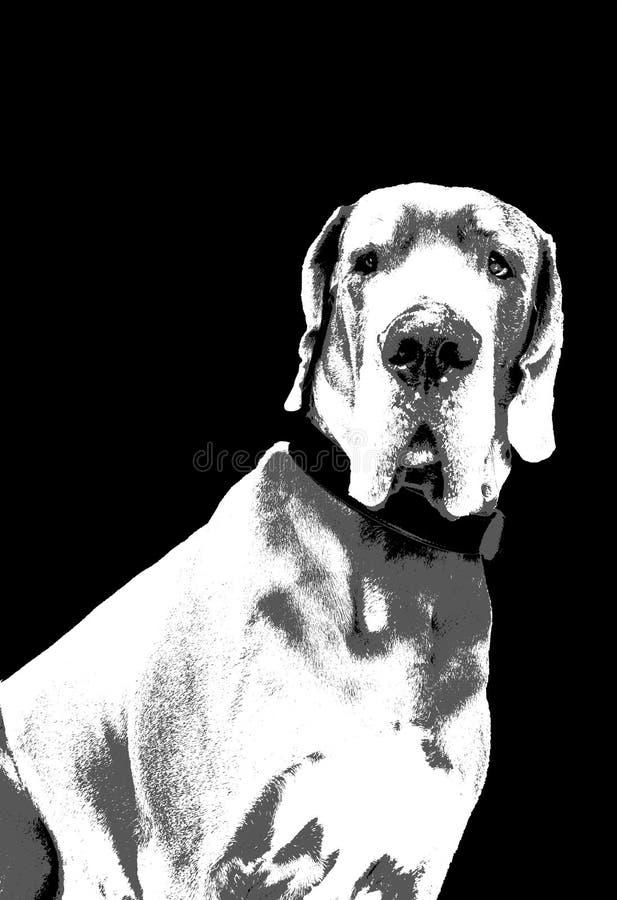 Great Dane Biały i Popielaty Artystyczny Czarny wektor ilustracji