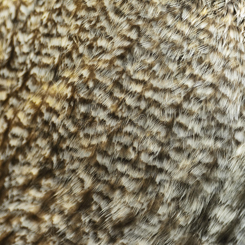 Great Grey Owl feathers stock photography