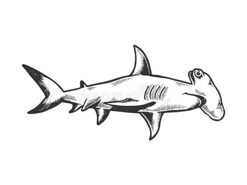 Great hammerhead shark engraving vector royalty free illustration