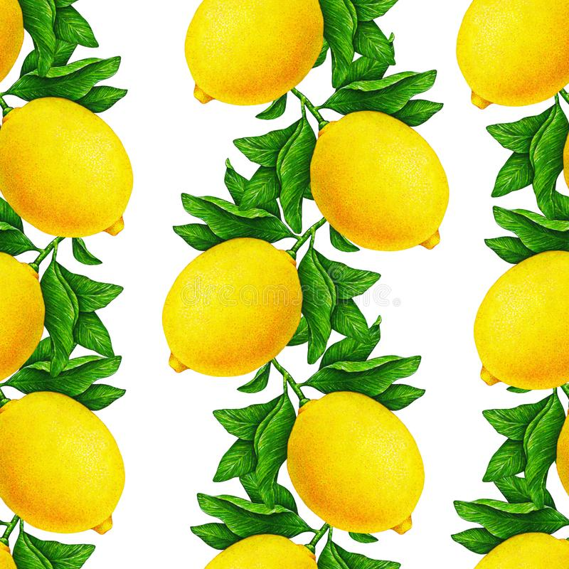 Great illustration of beautiful yellow lemon fruits on a branch with green leaves isolated on white background. Seamless pattern royalty free illustration