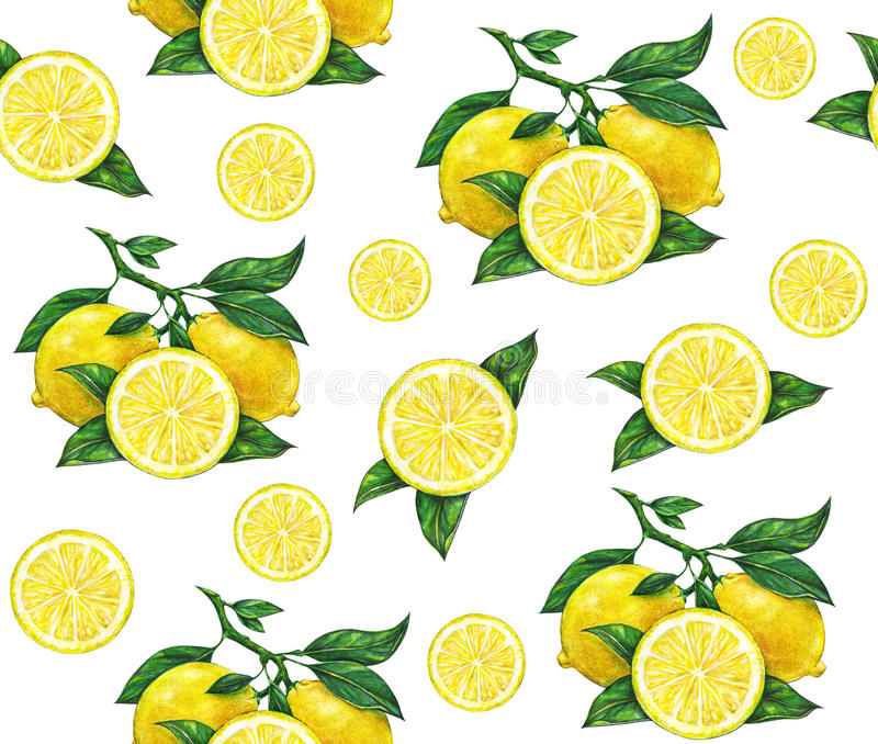 Great illustration of beautiful yellow lemon fruits on white background. Water color drawing of lemon. Seamless pattern.  royalty free illustration