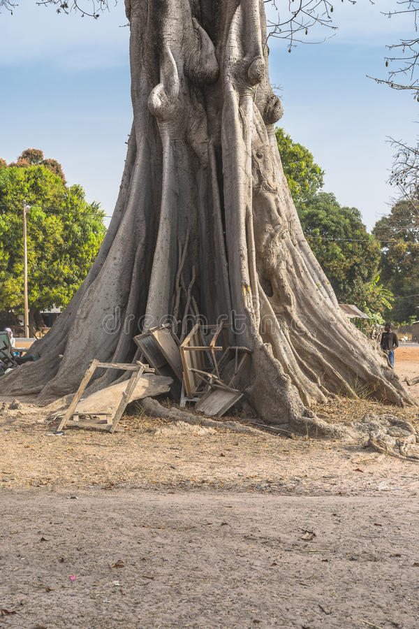 Great Kapok Tree. Fragment of trunk very old kapok tree in village in Gambia. Africa stock image