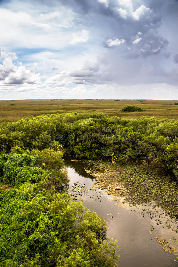 Great landscape at Everglades National Park royalty free stock images