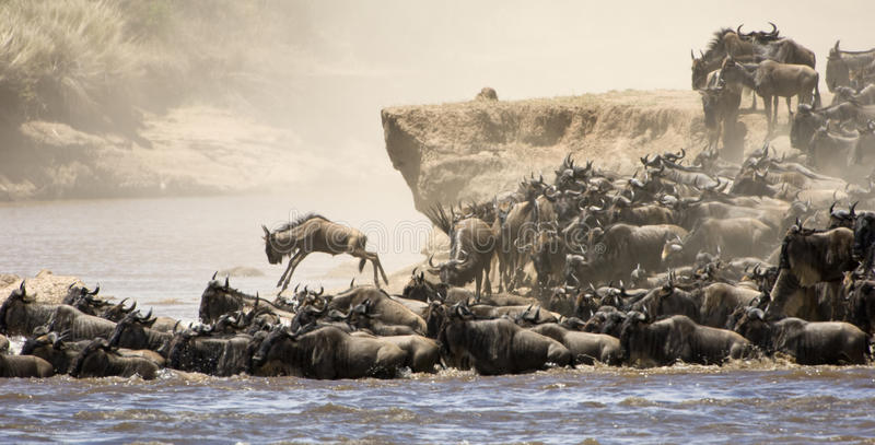 Great migration stock photography