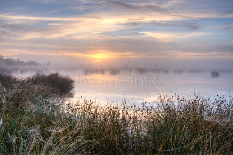 Download Great Misty Sunset Over Swamp Stock Image - Image: 34582517