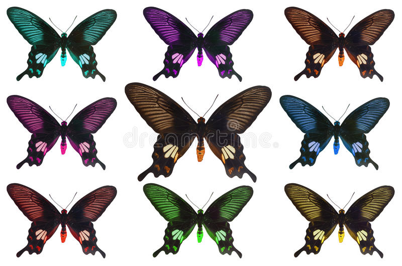 Great mormon. Butterfly, Isolated on white with clipping path royalty free stock photo
