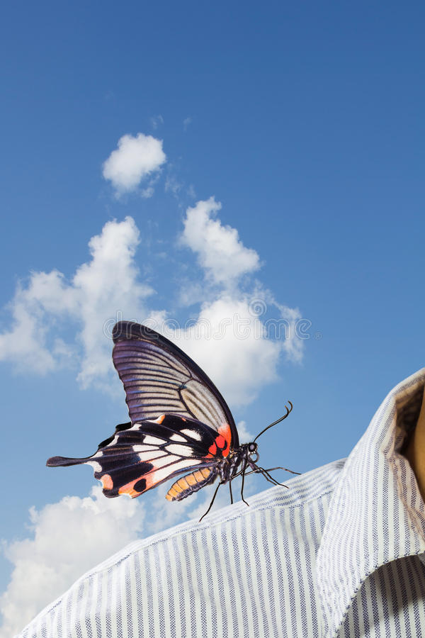 Great Mormon (Papilio memnon agenor) butterfly. Great mormon butterfly perching on business man's shoulder, supporting concept royalty free stock photo