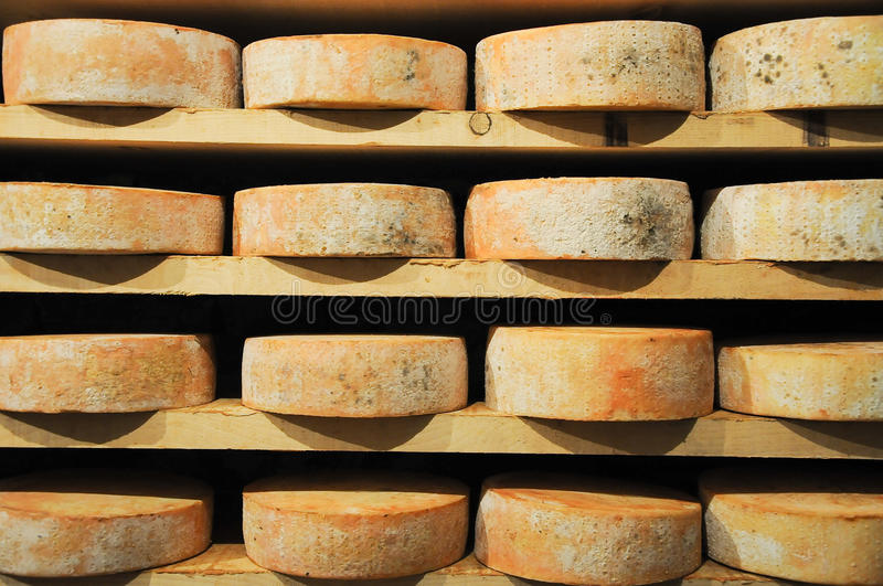Great and original forms of Fontina , typical Italian mountain c royalty free stock images
