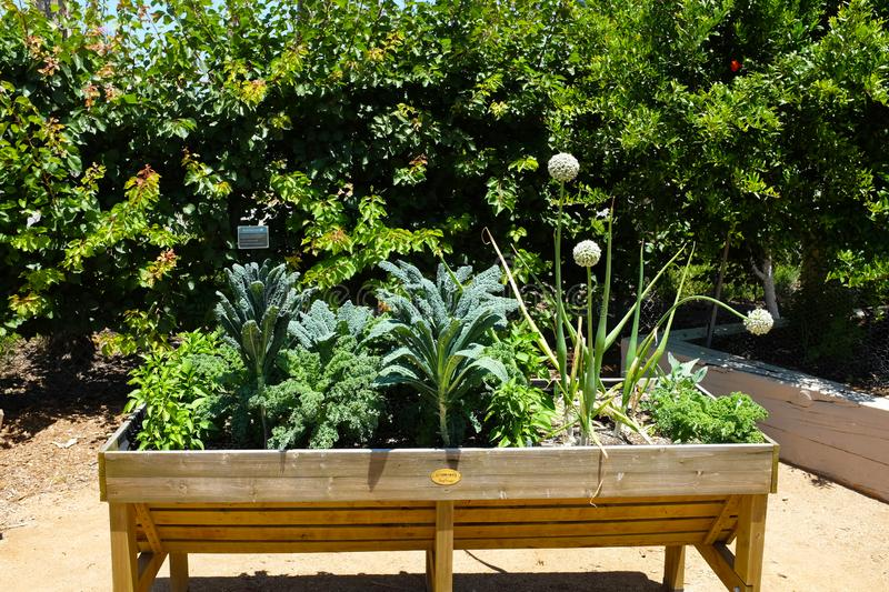 Great Park Farm and Food Lab. A one acre plot in Irvine`s Great Part established as a demonstration of sustainable urban. IRIVNE, CALIFORNIA - JULY 11, 2019 stock photos