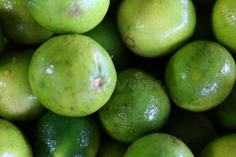 Citrus Limes on Display Closeup with Macro Lens. A great photo of limes shot with a macro lens.  A great background texture for graphic artists, web designers royalty free stock image