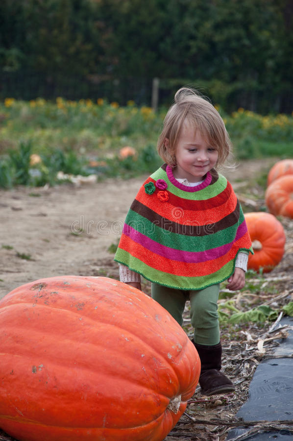 Download The Great Pumpkin stock photo. Image of hair, choosing - 16643614