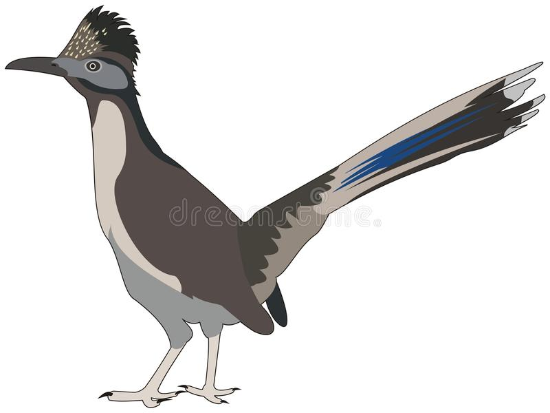 Great roadrunner bird. Illustration of bird great roadrunner vector illustration