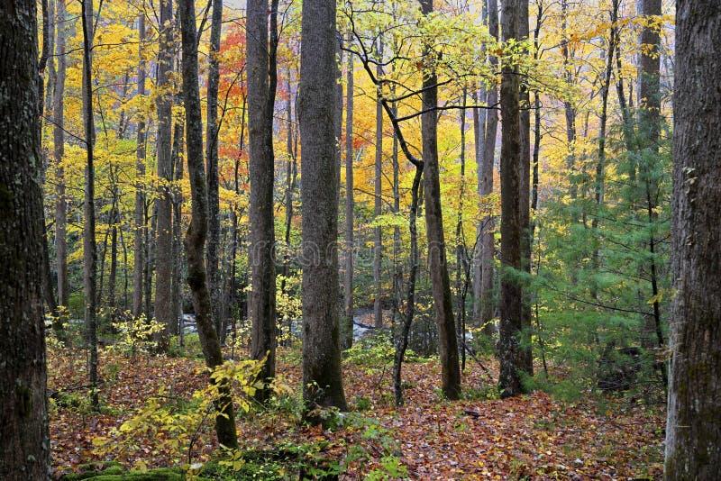 Great Smoky Mountains in autunno fotografia stock