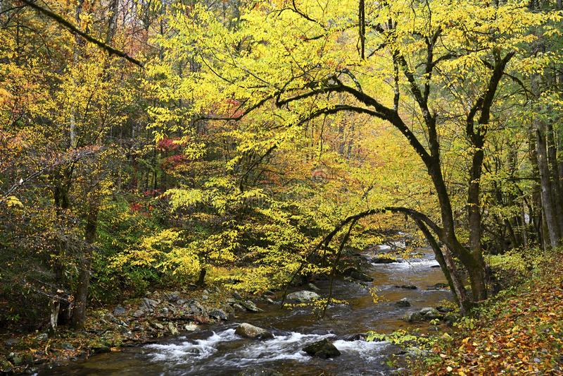 Great Smoky Mountains in autunno fotografie stock libere da diritti