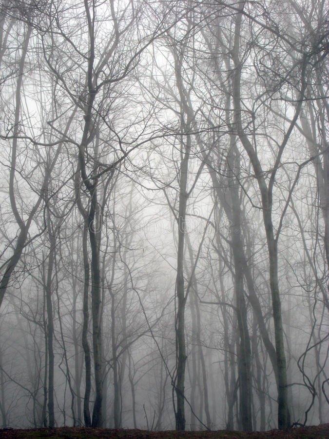 Great Smoky Mountains Forest Wintry Scene. An early morning hazy wintry view of The Great Smoky Mountains forest trees royalty free stock photography