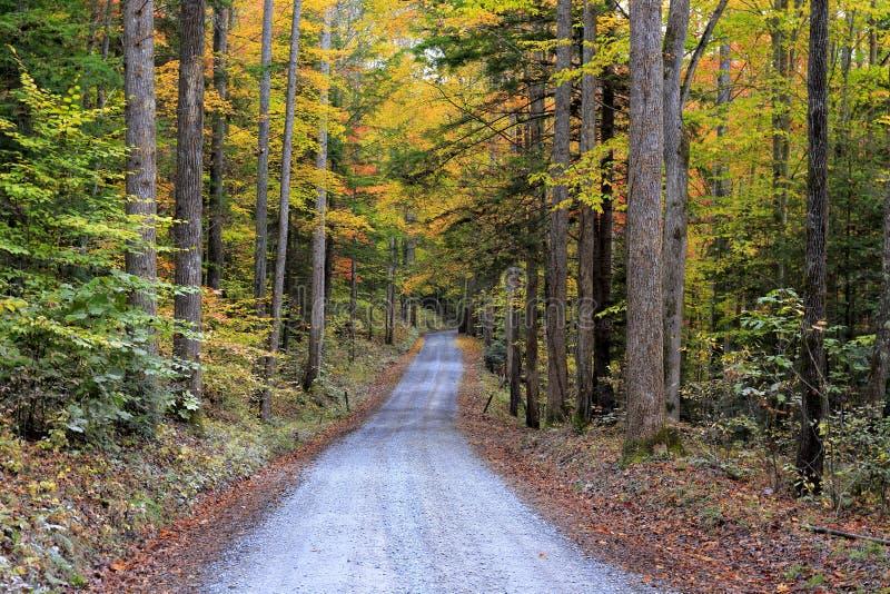 Great Smoky Mountains National Park, North Carolina. Autumn foliage along an unpaved road in Great Smoky Mountains National Park, North Carolina stock photos
