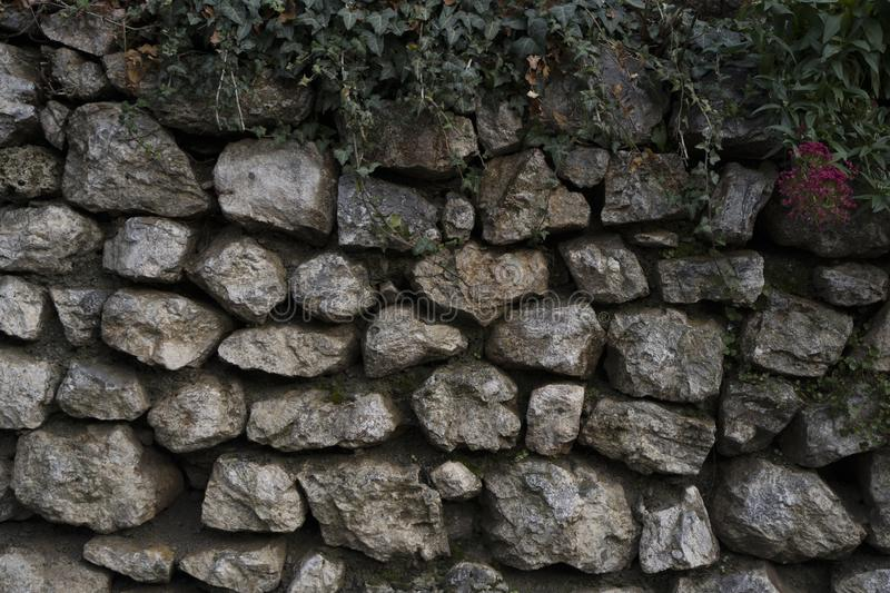 Great stone wall good for texture backgrounds. Wallpapers. Old stones with green leaves on top royalty free stock images