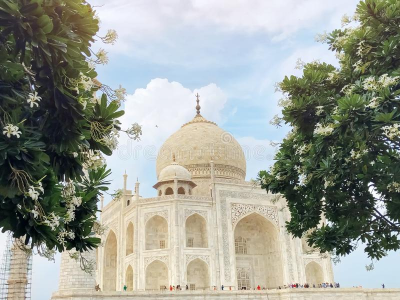 The great taj mahal. Different perspectives. The great taj mahal. Looking from behind beautiful lush green leaves with white flowers stock images