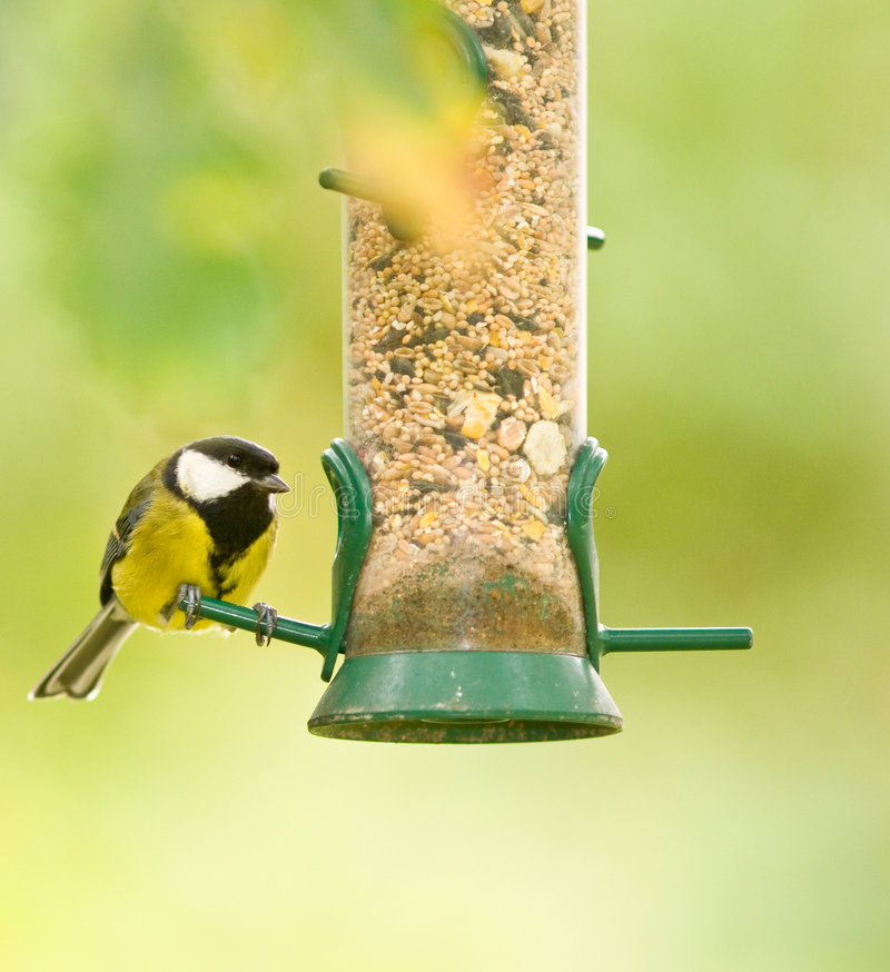 Download Great Tit stock photo. Image of animal, cute, feathers - 6849064