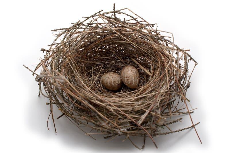 Great tit s nest