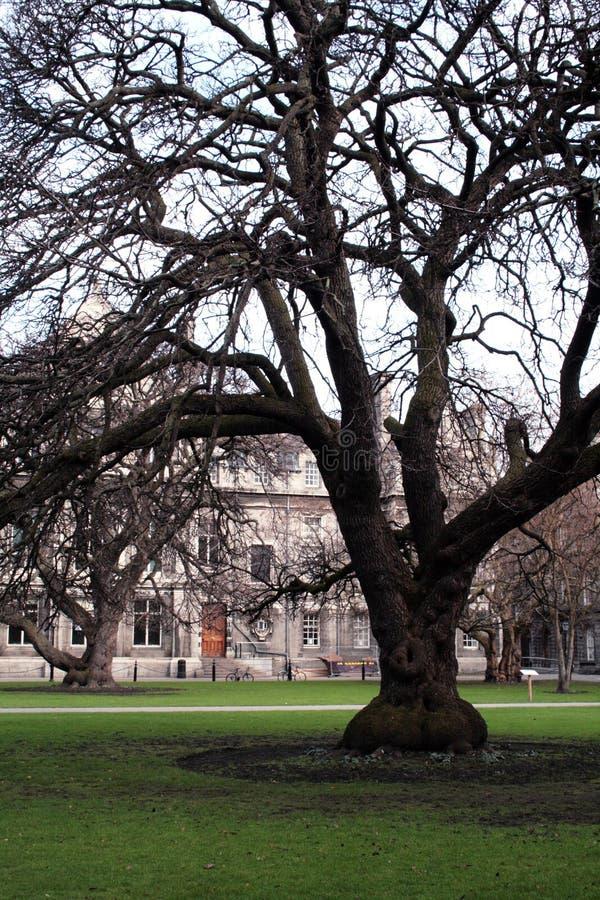 Download Great tree stock image. Image of college, irish, shadow - 8218487