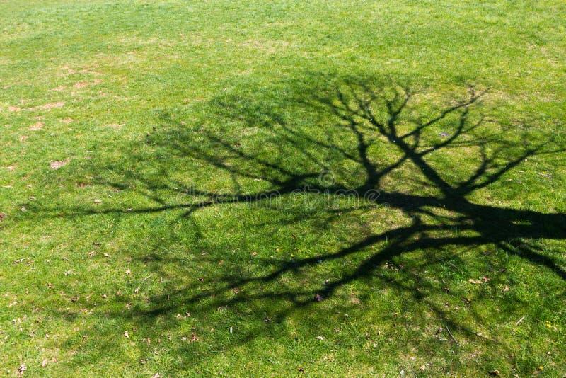 Great Tree Shadow Stock Photography